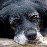 Учимся подбирать противопаразитарные средства для домашних животных