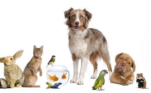 Разнообразные товары для домашних животных