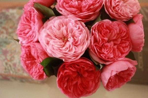 Что за цветы – пионовидные розы?